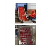 Tomato Paste/Ketchup Production Line