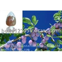 Bilberry Extract 25% anthocyanidins.