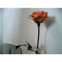 PU Flower rose Real soft touch real flower feelings Artificial Flower