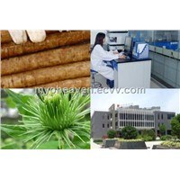 Burdock Root Powder Extract
