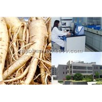 Panax Ginseng Powder Extract