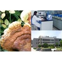 Reishi Mushroom Powder Extract