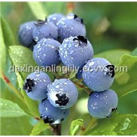 Bilberry Extract - China & European