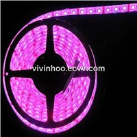 low price! 5050 waterpoof strip led lights with DC 12V