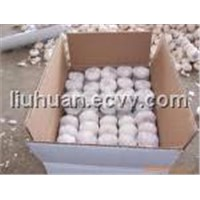 Fresh Qingshan Garlic of 2011