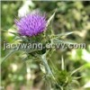 Supply Milk Thistle Extract Powder