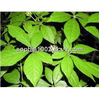 Nettle Root Extract 1% Silic Acid (HPLC), 4:1, sophia(at)international-biz.com
