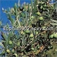 Ocimum Sanctum Plant Extract
