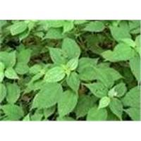 3,4-Divanillyltetrahydrofuran (Nettle Extract)