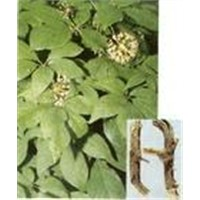 Siberian Ginseng Extract 0.8% -1.2%