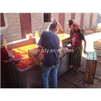 Low investment of tomato paste production line from rogerzdy at gmail dot com.
