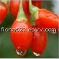 high quality Wolfberry Fruit Extract with competitive price