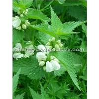 Nettle Herb Extract