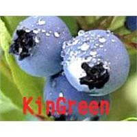 Bilberry P. E.25% 45%