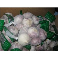 Fresh Solo Garlic (250gr x 40 Bags)