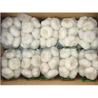 Pure White Garlic (500gr x 20bags Per Carton)