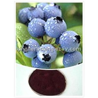 China Bilberry extract