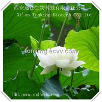 Hot sale  Nuciferine powder Lotus leaf extract of weight loss product