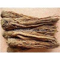 Sell Dong Quai Extract Powder