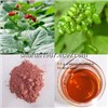 Panax Ginseng Berry (Fruit) Extract