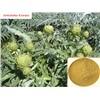 Tribulus Terrestris Extract Saponins40-90%