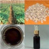 High quality American Ginseng Root Oil, Linoleic acid is more than 50%