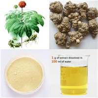 High quality Panax Notoginseng Root Extract, saponins 10-60%HPLC