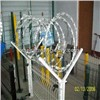 Single Coil Razor Wire/cross Concertina Coil Wire