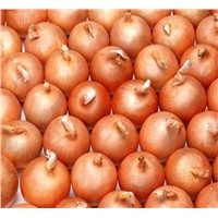 2014 New Crop Fresh Red Onion Yellow Onion