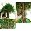 Artificial ficus fake plastic farbic banyan  tree microcarpa/golden ficus tree plant
