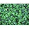 High quality Ivy Extract, Hederacoside C 10%HPLC