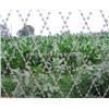 Welded Razor barbed Wire