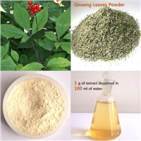 High quality Panax Ginseng Leaf Extract, 80%UV