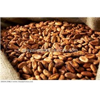Cocoa beans here for sale