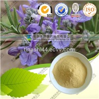 Natural Rosemary Extract/ Rosmarinic Acid 98 %