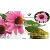 Echinacea Purpurea Extract Polyphenols 4%, 7%