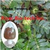Natural botanical ingredient Tribulus Terrestris extract
