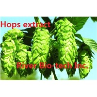 Natural herbal extract of Hops flower extract
