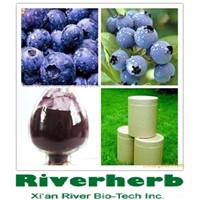 Bilberry extract of 25%Anthocyanidins