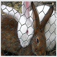 2014 Hot Sale Factory Supply Chicken Wire Netting