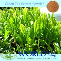 100% Natural 98%Tea Polyphenols/EGCG Green Tea Extract Powder Green Tea Extract Tea Polyphenols
