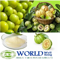 Organic Garcinia Cambogia Extract 10%-98%Hydroxy Citric Acid(HCA)Garcinia Cambogia Extract Powder
