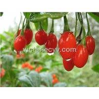 Wolfberry extract powder with ISO9001 ISO22000 Certificate