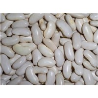2014 new crop white kidney bean