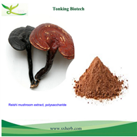 Reishi mushroom extract, Ganoderma lucidium extract, Polysaccharide 20%