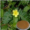 Tribulus Terrestris Extract Saponins 40%, 60 % 80 % , 90%