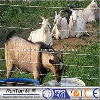 Wire Mesh Cattle Fence (100% Factory )