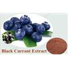 Pure natural black currant extract with 25% Anthocyanin