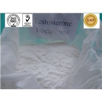 Testosterone isocaproate/ bodybuilding / Testosterone Steroid Hormone / 15262-86-9
