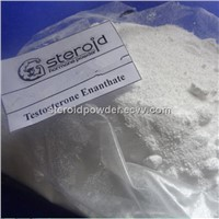 Testosterone Enanthate Steroids Testosterone Propionate Muscle Growth Bodybuilding